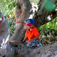 Our climbing tree